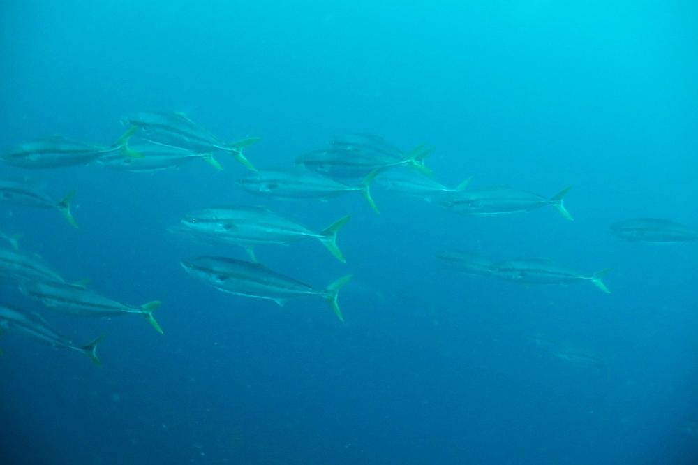 回遊魚トルネードの中へ!!@神子元
