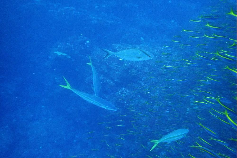 魚が群れ群れ‼@神子元