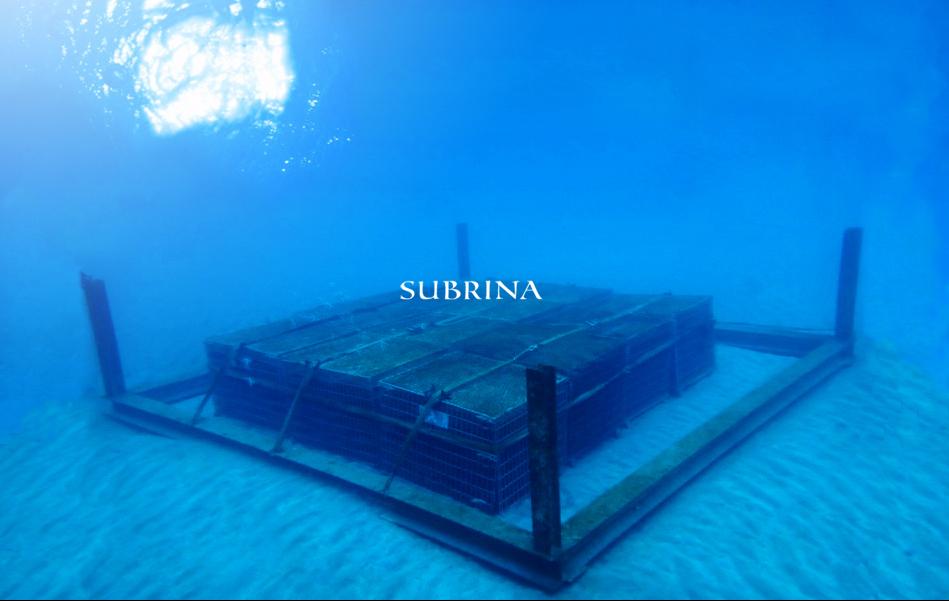 海底熟成ワインSABRINA予約受付開始!
