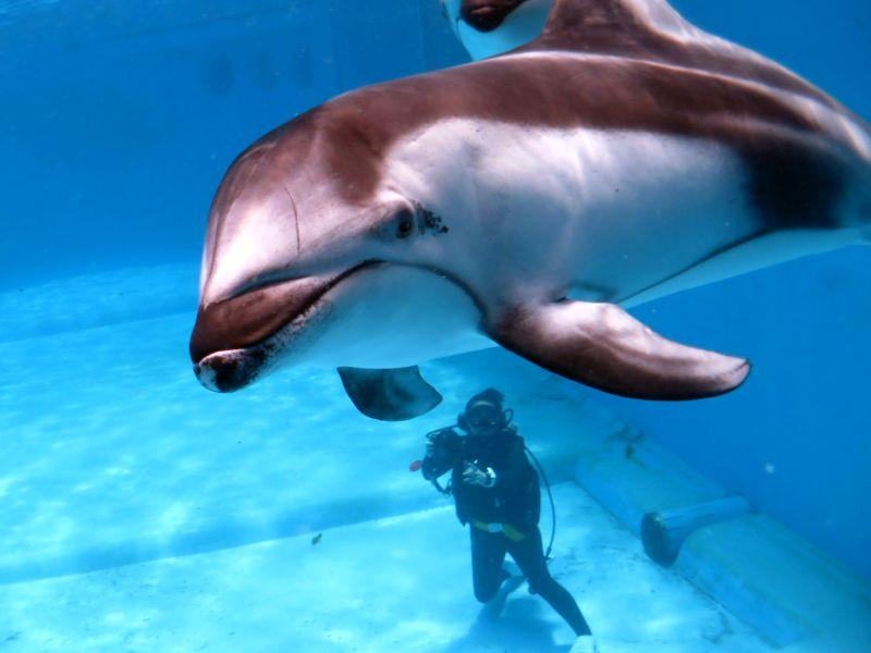 ドルフィンダイビング行ってきました@下田海中水族館
