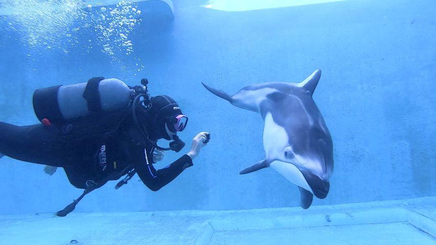 Merry Xmas with dolphins! @下田海中水族館