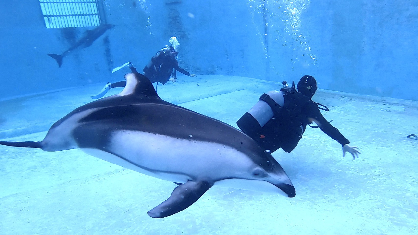 HAPPY NEW YEAR with Dolphins!!@下田海中水族館