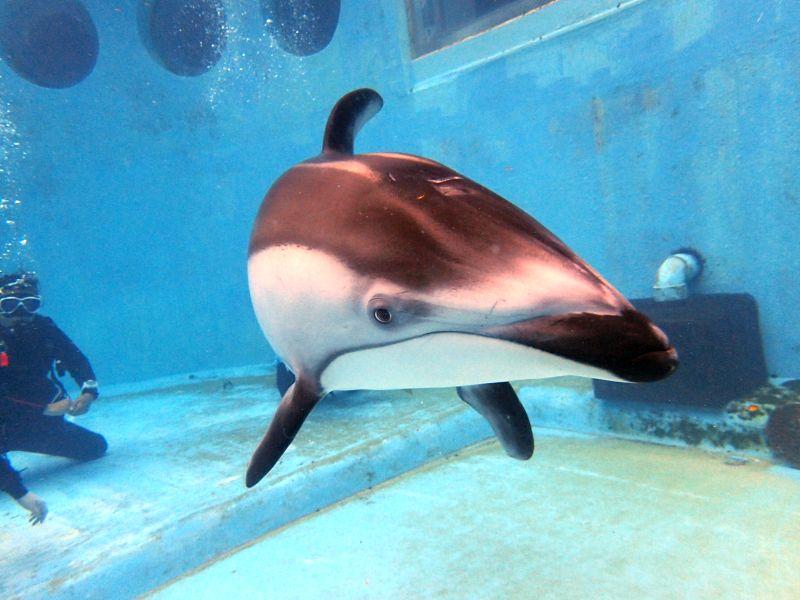 イルカとのふれあい体験