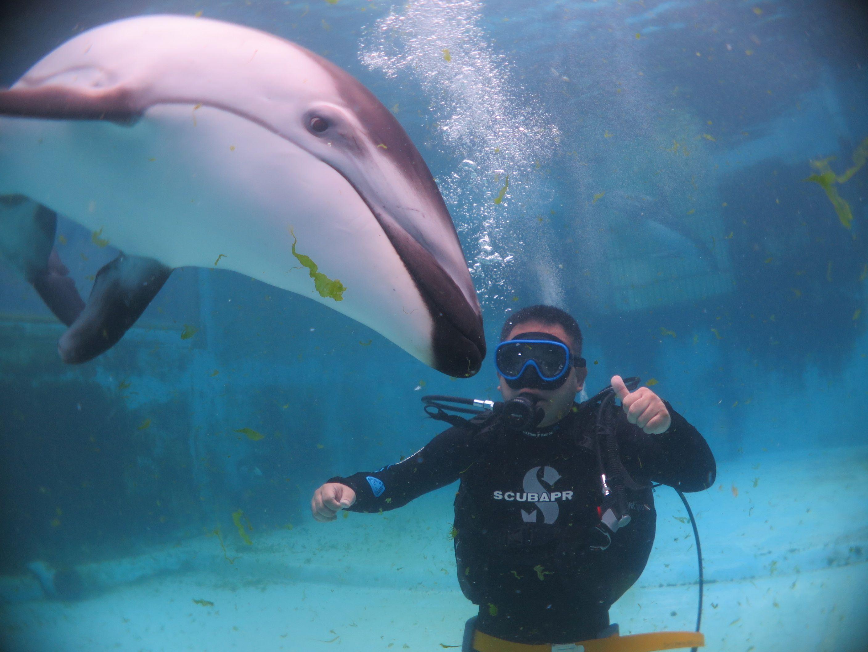 イルカとのふれあい