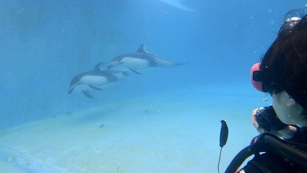 夏の始まり!@下田海中水族館