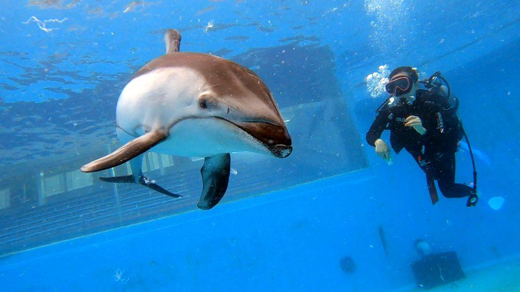 台風来ても関係なし!@下田海中水族館