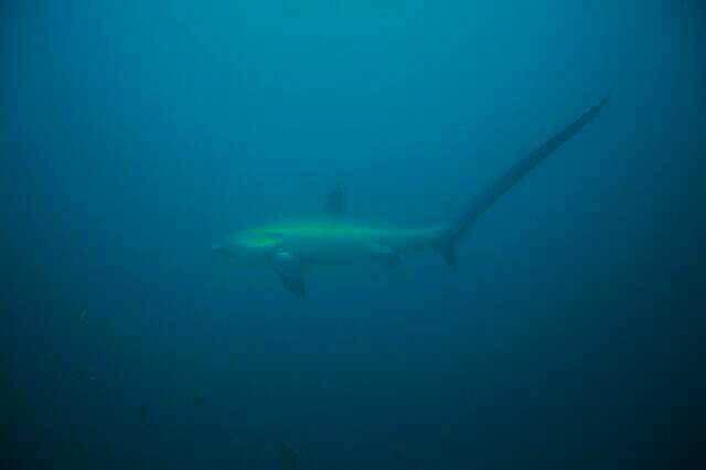 ハンマーズが狙う!冬のサメツアー!!@マラパスクア