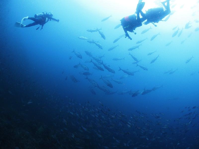 海の日連休もハンマーからスタート@神子元