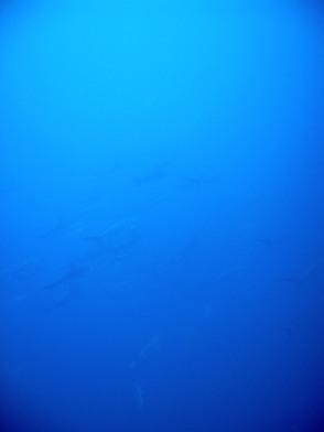 青く暖かい海にはハンマーが!@神子元