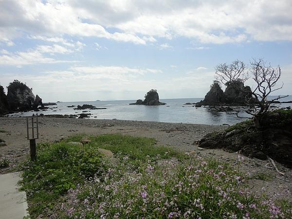 海藻の森!!@逢ヶ浜