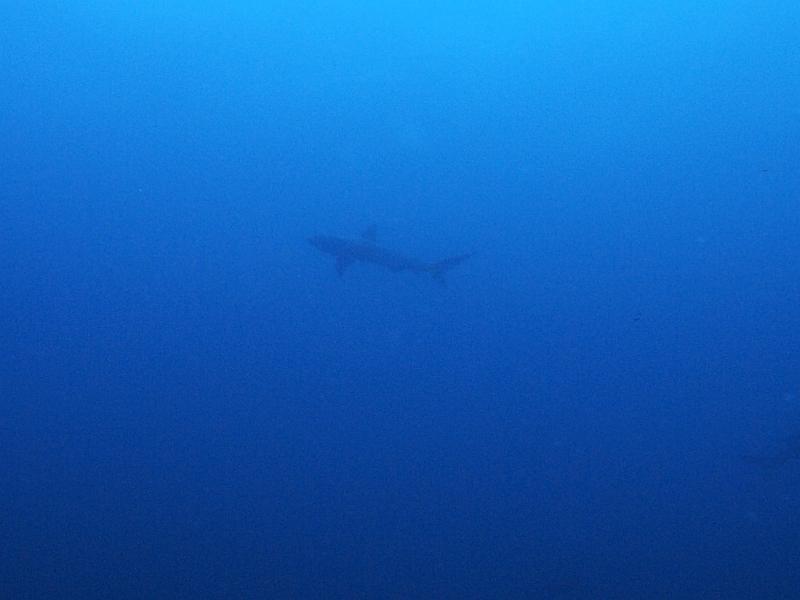 青い海にメジロ群れ!!!@神子元