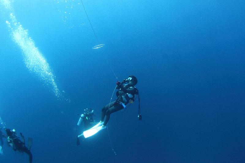 青い海にハンマーの群れは最高です!!@神子元