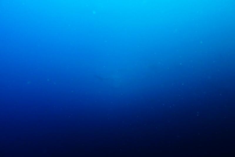 海はつながっている!!@須崎
