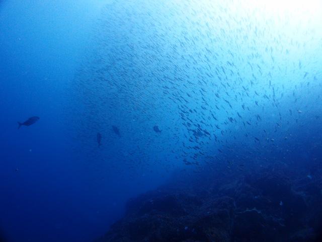 青い海!暖かい海アゲインそしてハンマーも@神子元