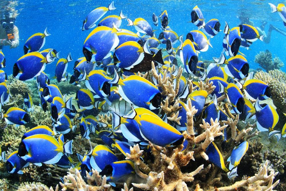 2015春は赤道直下ガーフ環礁&ギンガメ天国ボホールで皆様をお待ちしています!