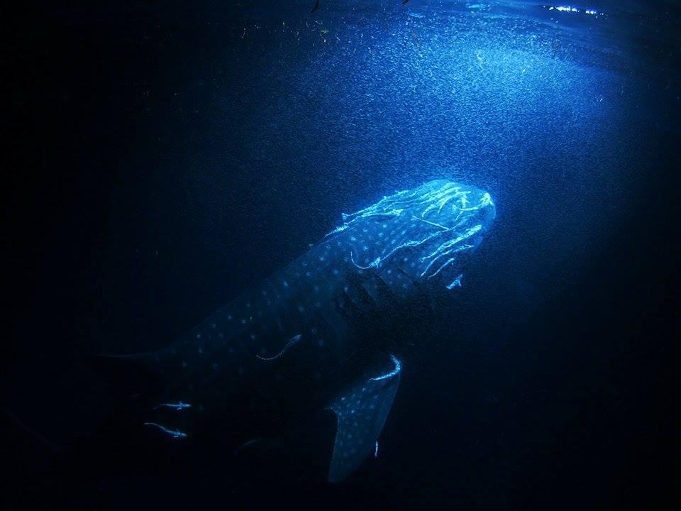 フォームラ環礁のポテンシャル!@モルディブ