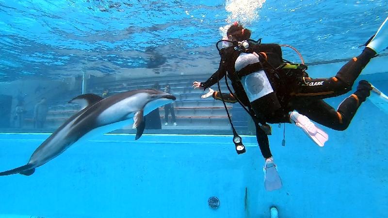 【未経験者大歓迎!】日本初・プールでカマイルカと泳ぐドルフィンダイビング!